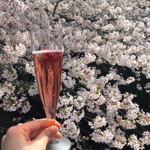 今年の桜が散っていきます・・・_f0083294_19235199.jpg