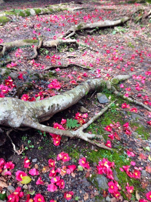 春爛漫   椿の森_c0100195_23413648.jpg