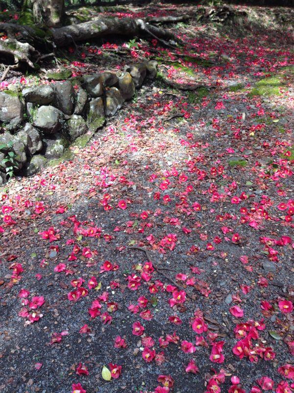 春爛漫   椿の森_c0100195_23413718.jpg