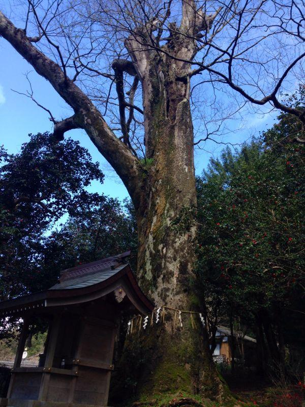 春爛漫   椿の森_c0100195_23413998.jpg