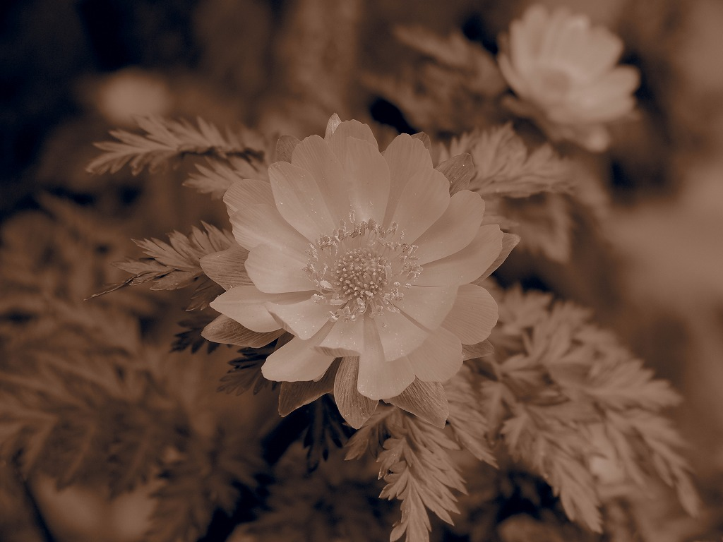 f0138305_2012896.jpg