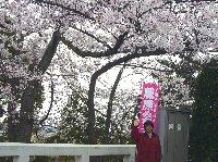 茶臼山公園でお花見会_c0133422_23255749.jpg