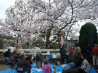 茶臼山公園でお花見会_c0133422_23313725.jpg