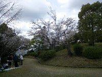 茶臼山公園でお花見会_c0133422_2335729.jpg