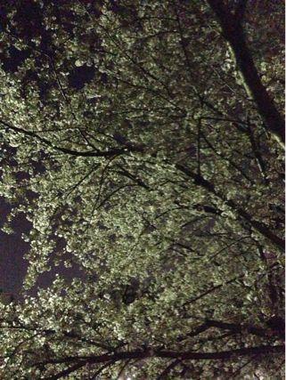 夜桜ランニング♪ ②_b0203925_21342878.jpg