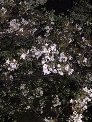 夜桜ランニング♪ ②_b0203925_21343017.jpg