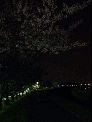 夜桜ランニング♪ ②_b0203925_21343029.jpg