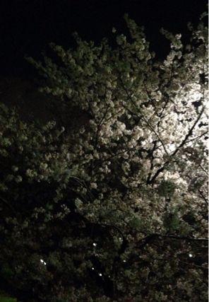 夜桜ランニング♪ ②_b0203925_21343178.jpg