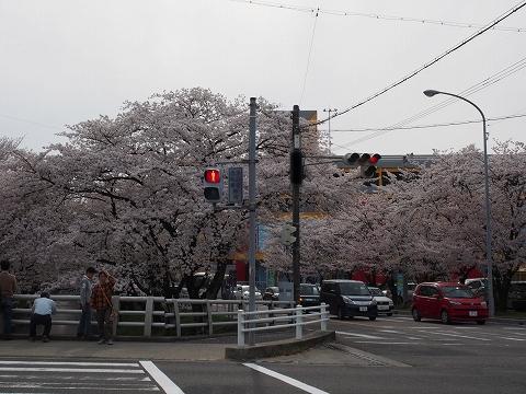 ミラーレスカメラで桜撮影_c0077531_15574170.jpg