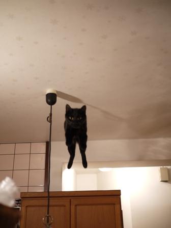 空飛ぶももんが猫 てぃぁら編。_a0143140_22324346.jpg