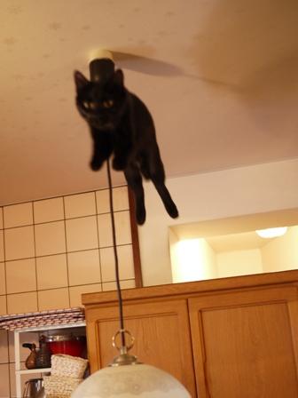 空飛ぶももんが猫 てぃぁら編。_a0143140_22331039.jpg
