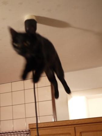 空飛ぶももんが猫 てぃぁら編。_a0143140_22352791.jpg