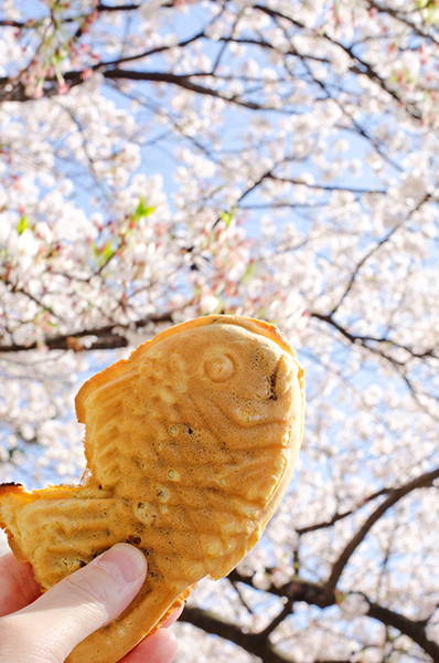 昼散る桜、夜舞う桜_a0003650_001273.jpg