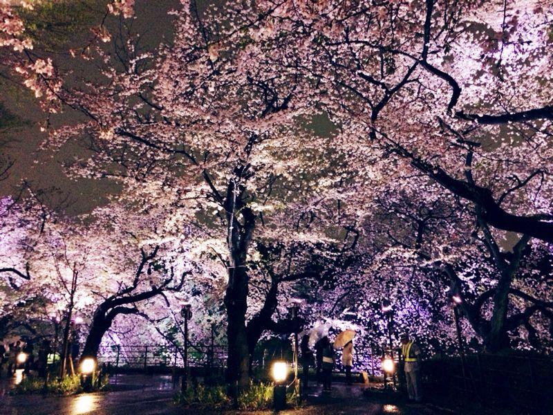 大満足の東京お花見! & 白金ジャンボ!_c0151965_13503349.jpg