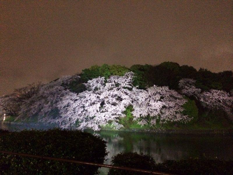 大満足の東京お花見! & 白金ジャンボ!_c0151965_13503412.jpg