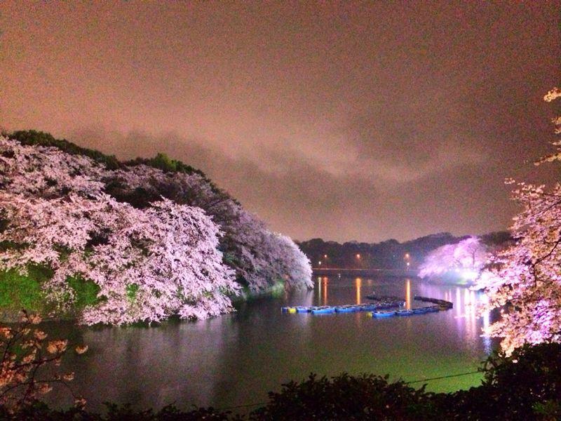 大満足の東京お花見! & 白金ジャンボ!_c0151965_13503524.jpg
