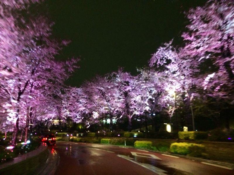 大満足の東京お花見! & 白金ジャンボ!_c0151965_13503683.jpg
