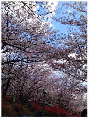 sakura2014_d0064366_16575962.jpg
