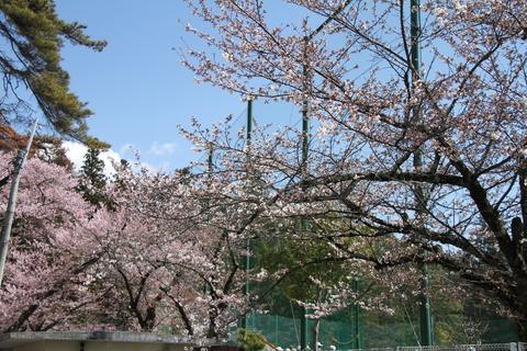 桜_b0219267_21112484.jpg