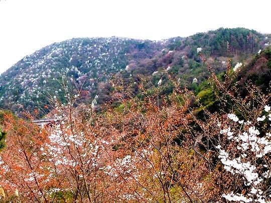 山一面を彩るモザイク。いったい何の花 ・・・_b0102572_1363360.jpg