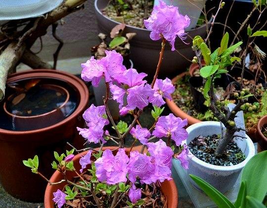 わが庭先の春一番は ・・・_b0102572_17302723.jpg