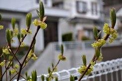 わが庭先の春一番は ・・・_b0102572_17401466.jpg