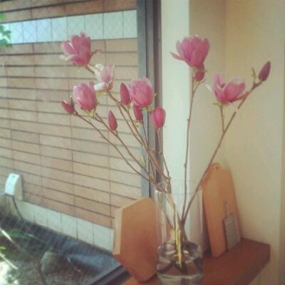 桜もいいけどね。_e0330790_11491252.jpg