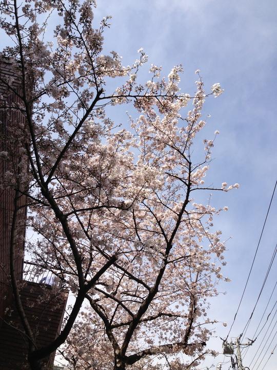 春がきた_f0236691_11131910.jpg