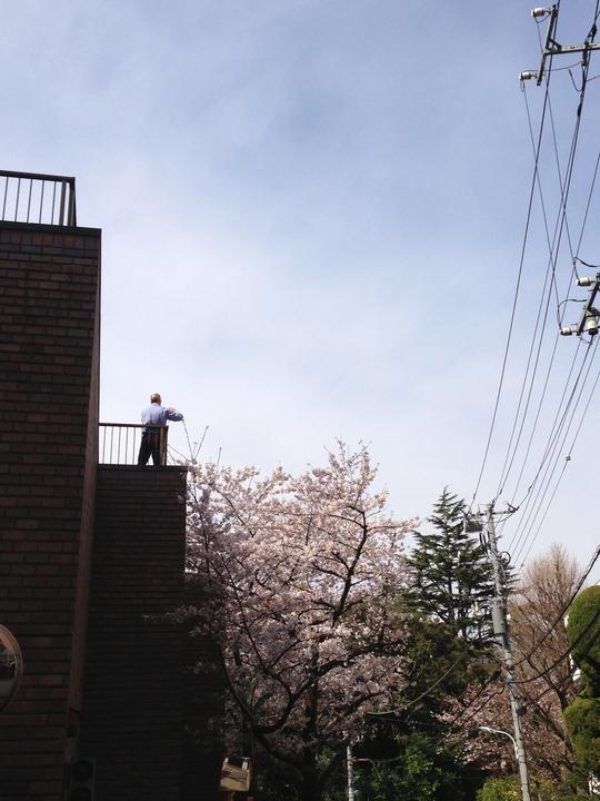 春がきた_f0236691_11133238.jpg