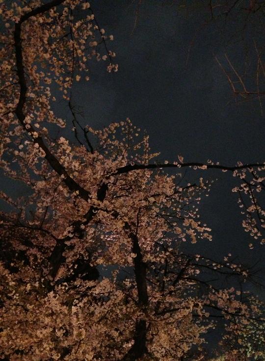 それぞれの花見。_f0236691_11224420.jpg