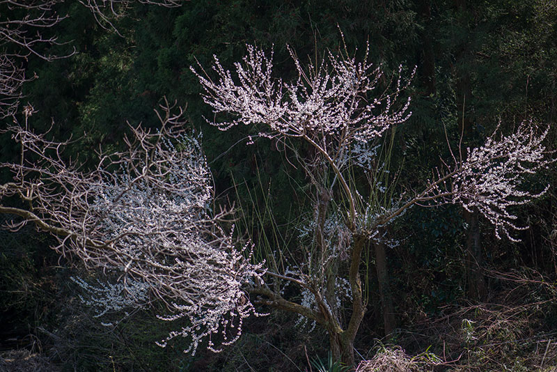 記憶の残像-667 2014年春-3 埼玉県毛呂山町 _f0215695_12344556.jpg