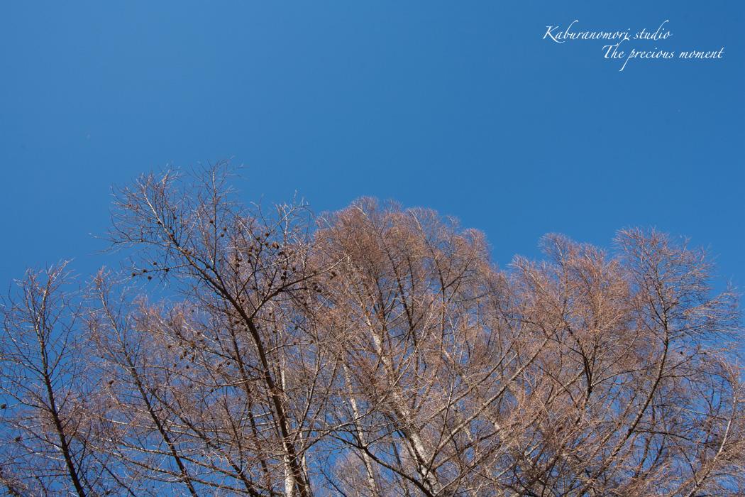 大雪前の写真  AT-X 17-35 F4 PRO FX編_c0137403_14441849.jpg
