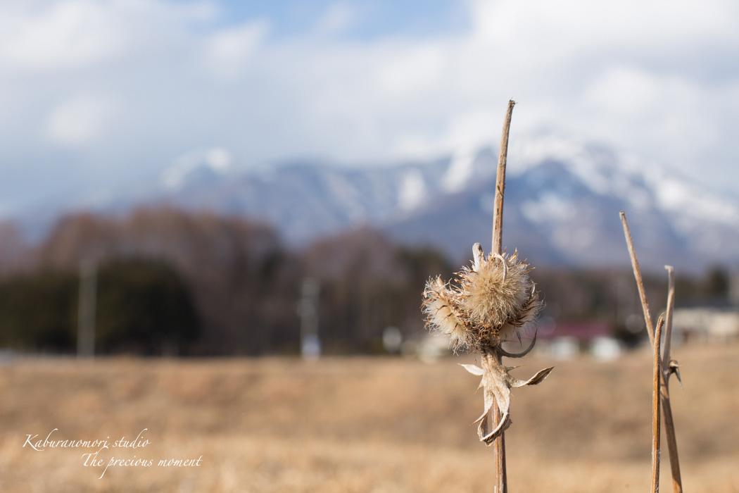 大雪前の写真 EOS X7編_c0137403_1461976.jpg
