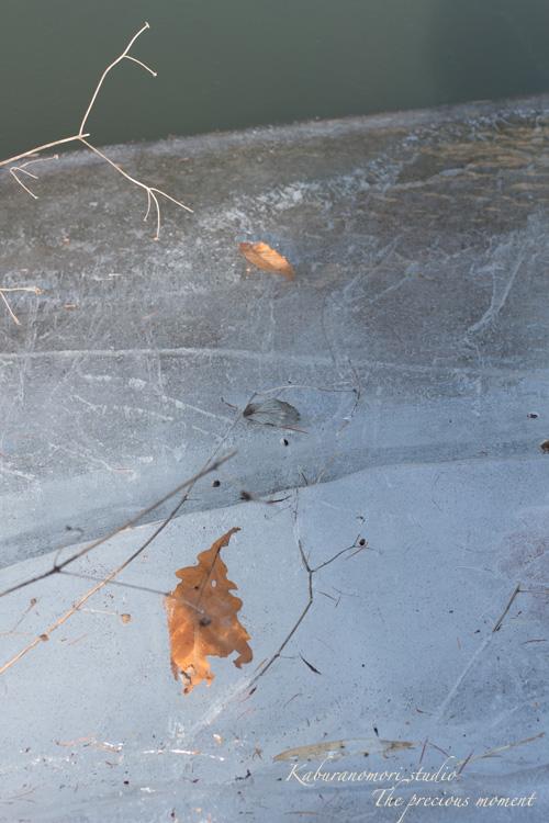 大雪前の写真 EOS X7編_c0137403_148596.jpg