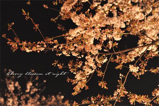 春雷と、夜のさくら。_d0174704_200597.jpg