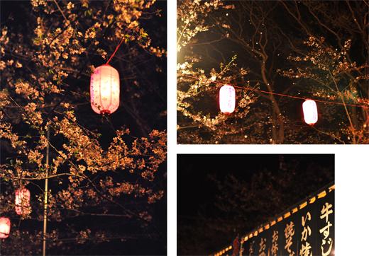 春雷と、夜のさくら。_d0174704_2062884.jpg