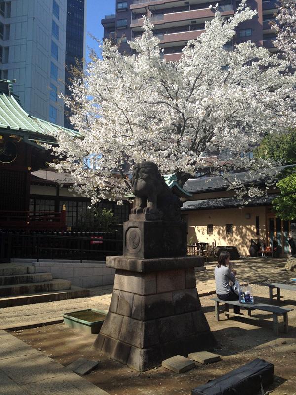 渋谷・金王八幡宮の桜が満開_a0000006_10274843.jpg