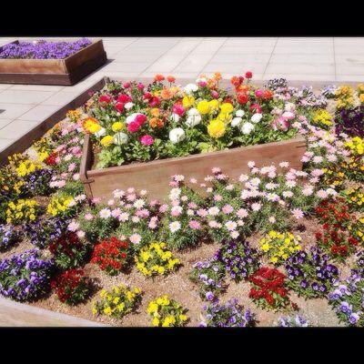 春_e0001906_1528082.jpg