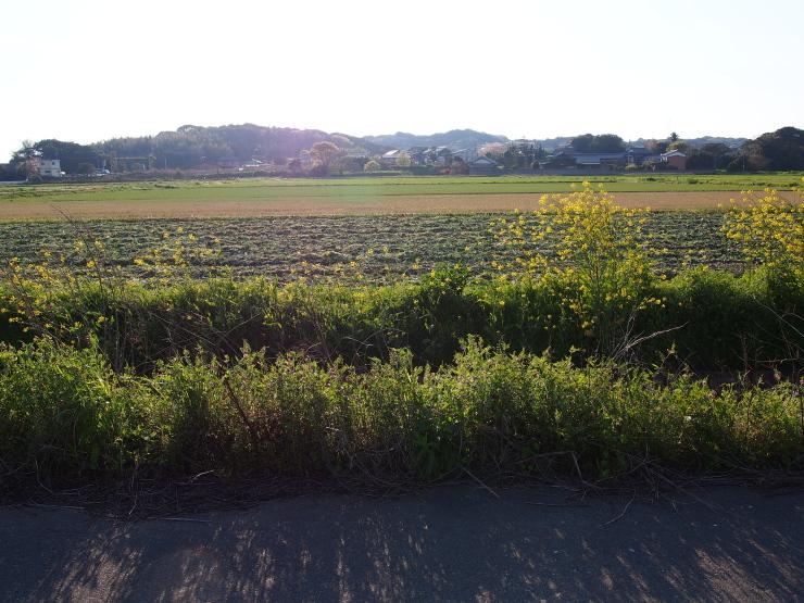 払川散歩_f0249710_23232139.jpg