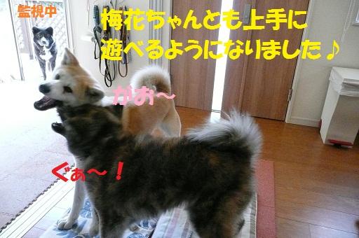 f0121712_5363396.jpg