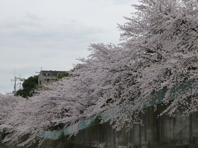 春の桜散歩_e0237625_14322420.jpg