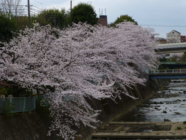 春の桜散歩_e0237625_14421319.jpg