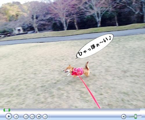 さくら~♪_c0049950_943133.jpg