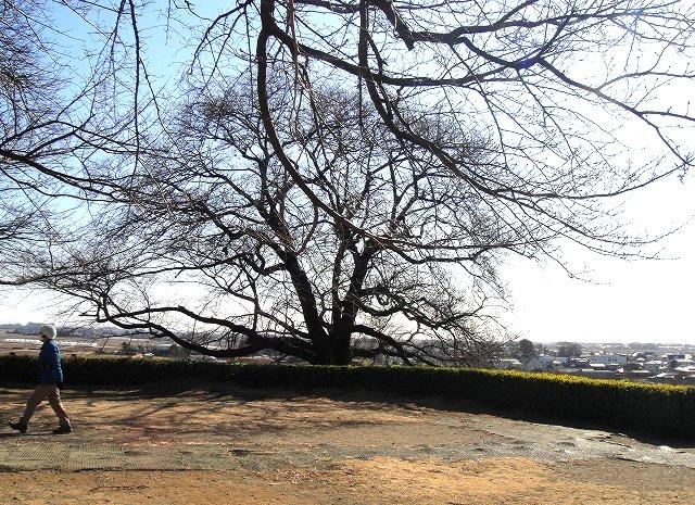<2014年4月>埼玉探訪:「行田・さきたま古墳群」&「和同開珎」発祥地(秩父)_c0119160_12184118.jpg