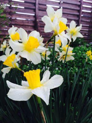 Spring Garden_e0251361_14561024.jpg