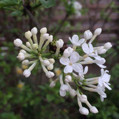 Spring Garden_e0251361_14561054.jpg