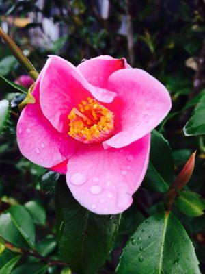 Spring Garden_e0251361_14561224.jpg