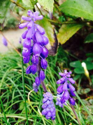 Spring Garden_e0251361_14561237.jpg