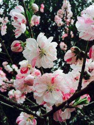 Spring Garden_e0251361_1456666.jpg