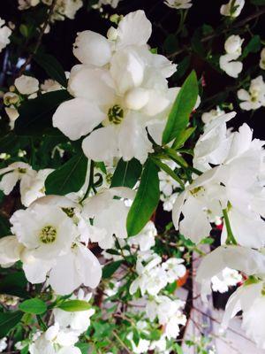 Spring Garden_e0251361_1456722.jpg